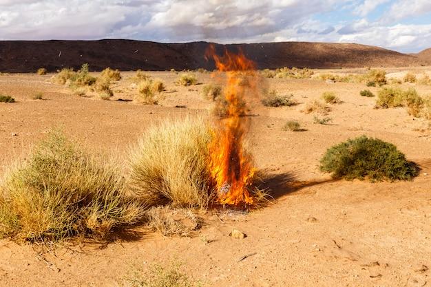 Brûler l'herbe de brousse dans le désert du sahara, maroc