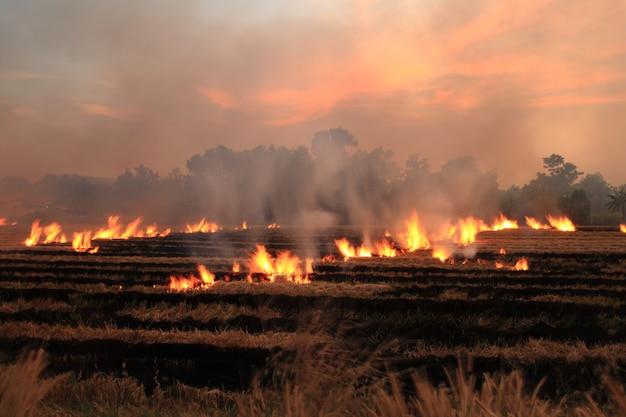 Brûler de la paille sèche dans un champ en bordure de route en thaïlande