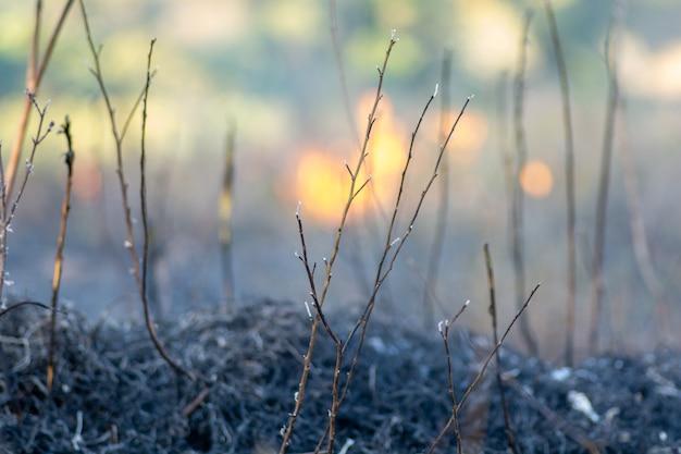 Brûlure de la forêt. l'amazonie brésilienne en flammes