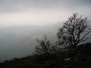 La brume, les arbres