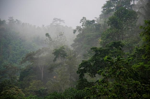 Brume sur la végétation tropicale à bali