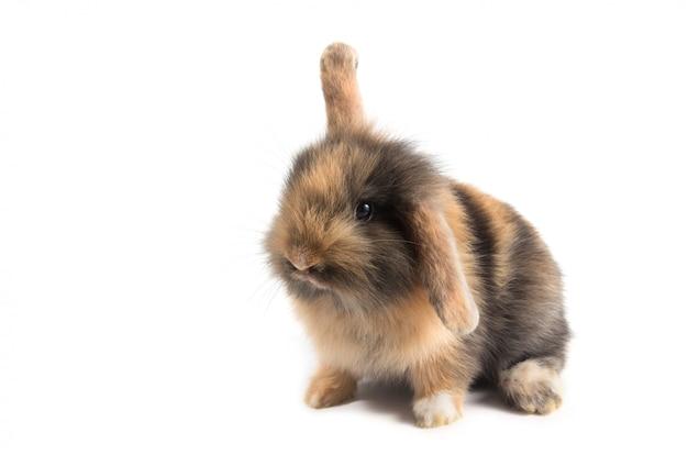 Brun adorable bébé lapin sur fond blanc
