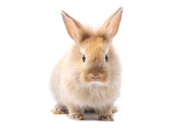 Brun adorable bébé lapin sur fond blanc.