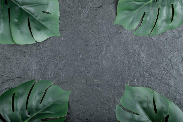 Brunch nature verte de feuilles sur fond noir.