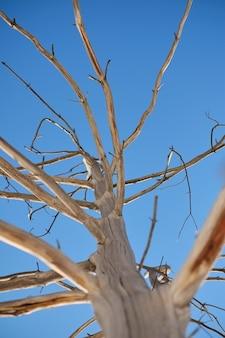 Un brunch sec d'arbre contre le ciel bleu