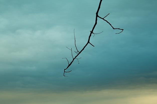 Brunchs vieux arbres