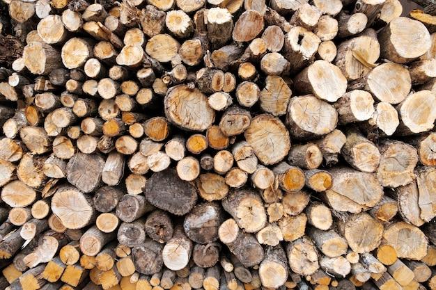 Bûche de bois coupé de fond