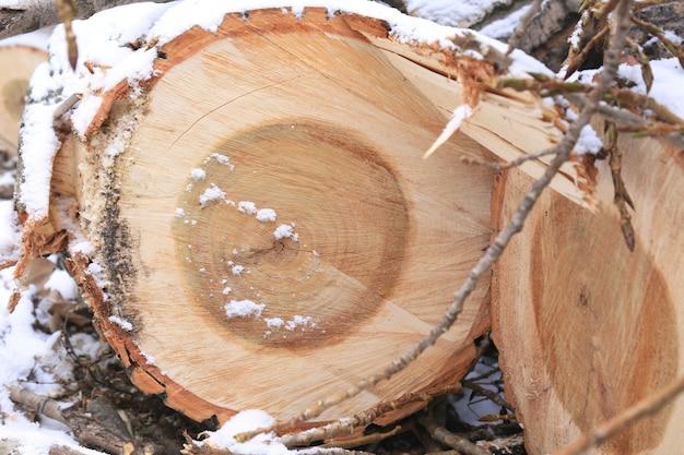 Bûches de bois et petites branches dans la neige