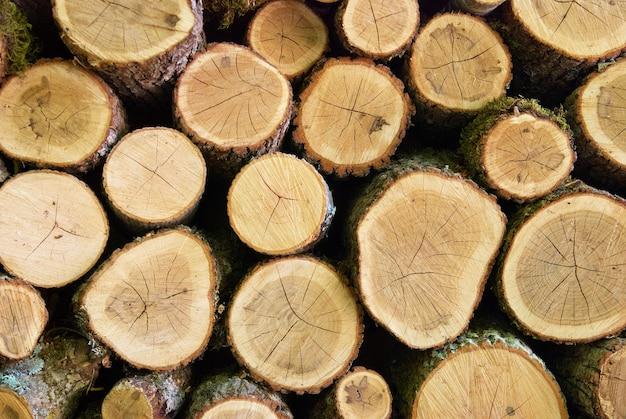 Les bûches en bois peuvent être utilisées pour le fond