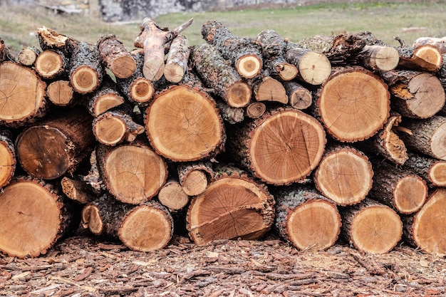 Bûches de bois de pinèdes dans la forêt, empilées en tas