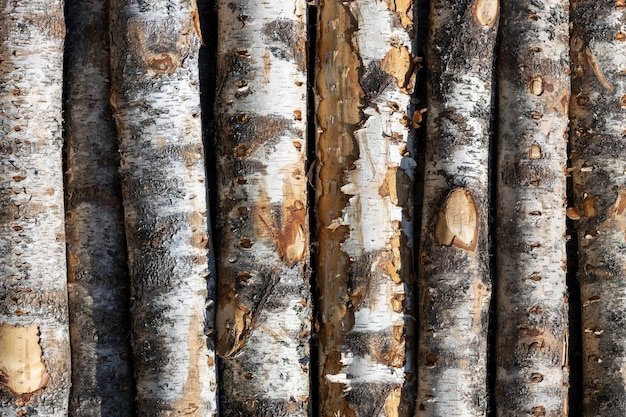 Bûches de bouleau en rangées. les arbres sont empilés avec des piles. charpente. photo de haute qualité
