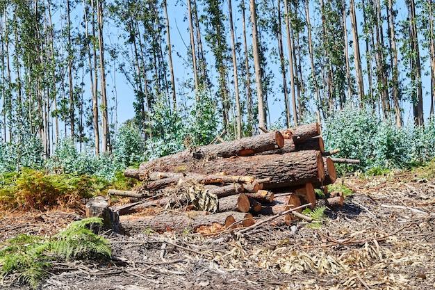 Bûches empilées coupées dans la forêt. notion de déforestation.