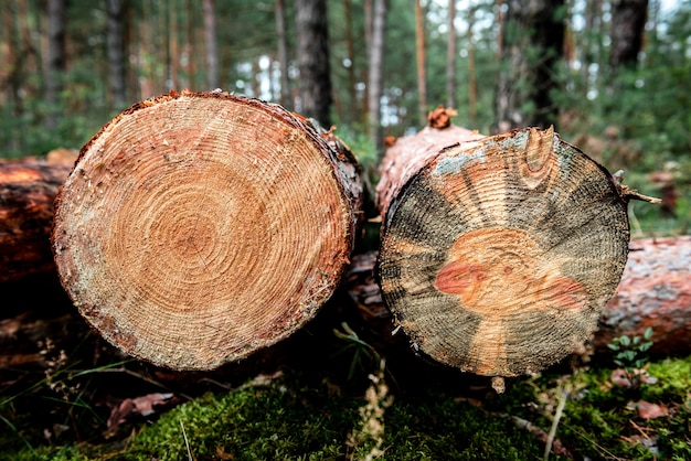 Bûches sciées dans la forêt.