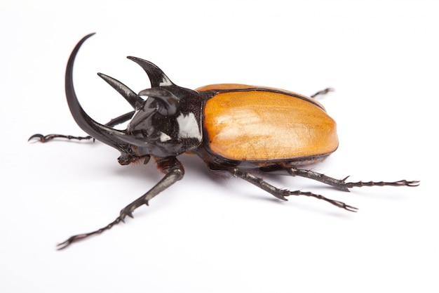 Bug sur l'éclairage de fond blanc