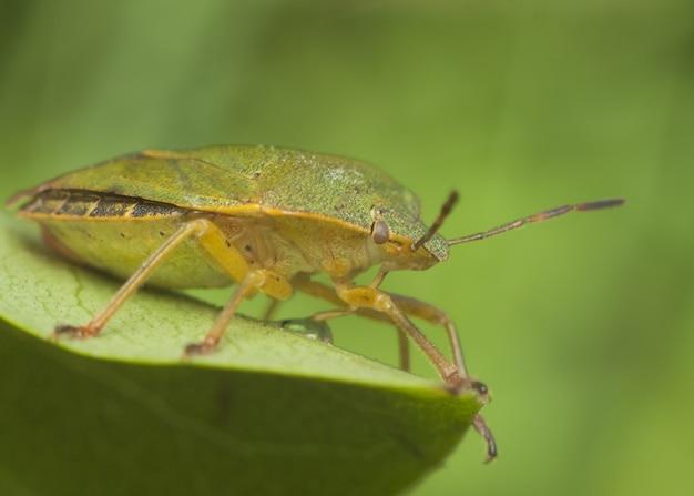 Bug sur feuille verte