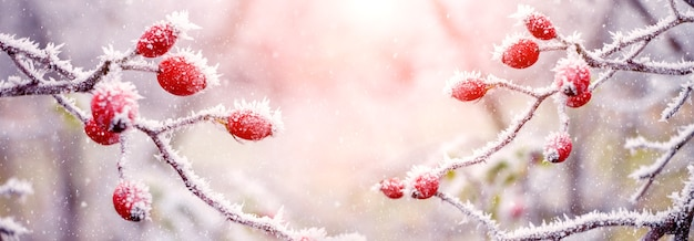 Buisson d'églantier avec des baies rouges le matin en plein soleil, un peu de neige vole. fond de noël et du nouvel an