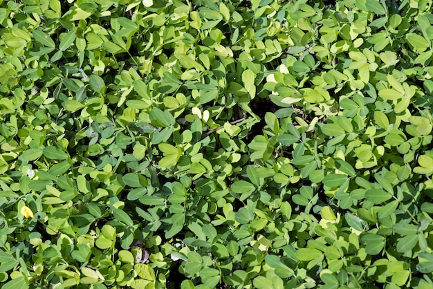 Buisson formé de feuilles vertes