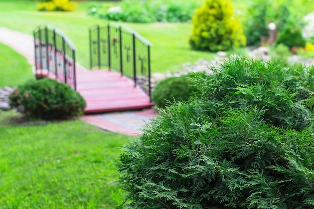 Buisson de genévrier en forme de boule. pont sur le ruisseau dans le parc. concept d'aménagement paysager.