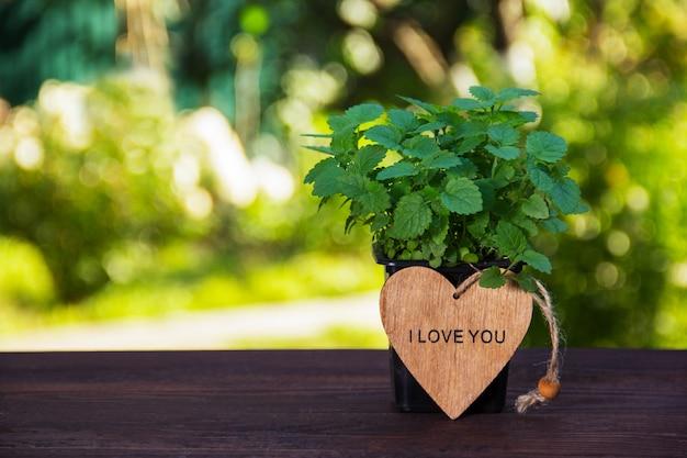 Buisson de jeune menthe parfumée et coeur en bois