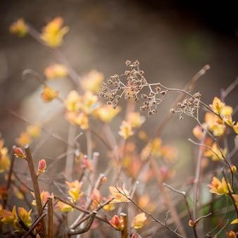 Buisson à petites feuilles jaunes et branche de fleur séchée