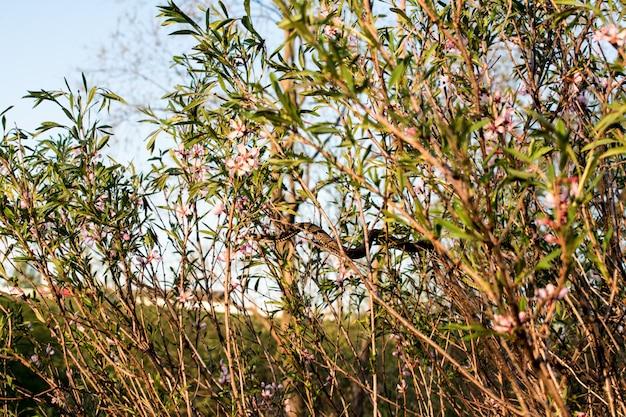 Buissons de fleurs roses serpent