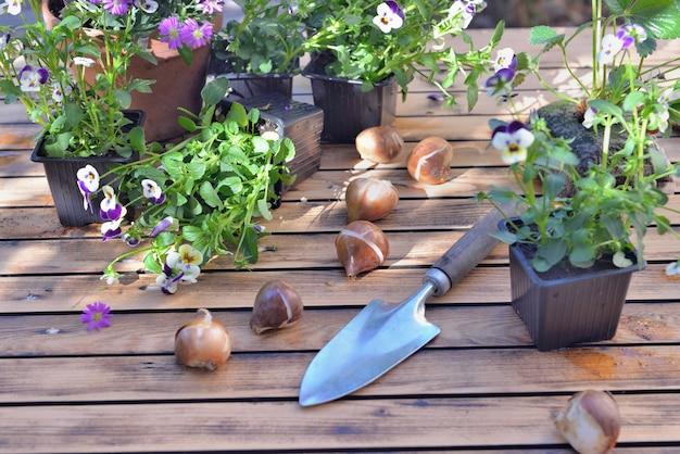 Bulbes de fleurs et pelle sur une table de jardin avec des pots de fleurs