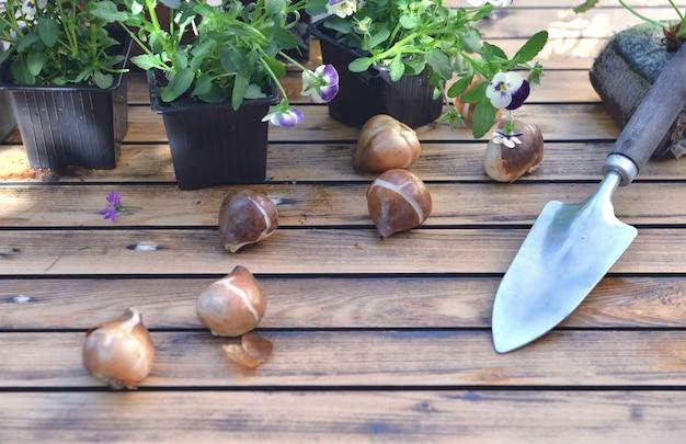 Bulbes de fleurs sur une table de jardin avec des fleurs en pot et une pelle