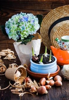 Bulbes de tulipes, pousses en pot, chapeau en osier, jacinthe et outils.