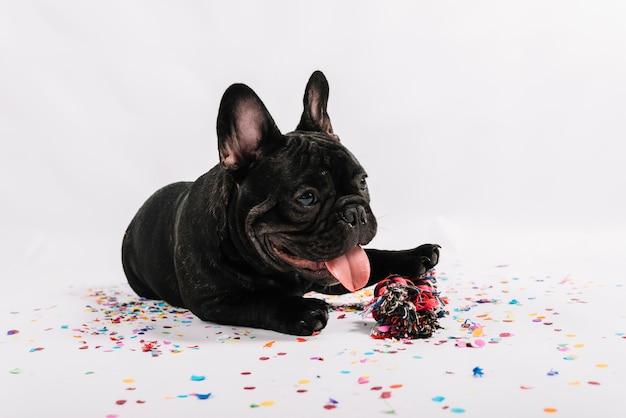 Bulldog charmant posant avec des éléments du parti