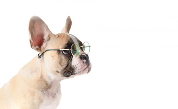 Bulldog français mignon lunettes de soleil isolé