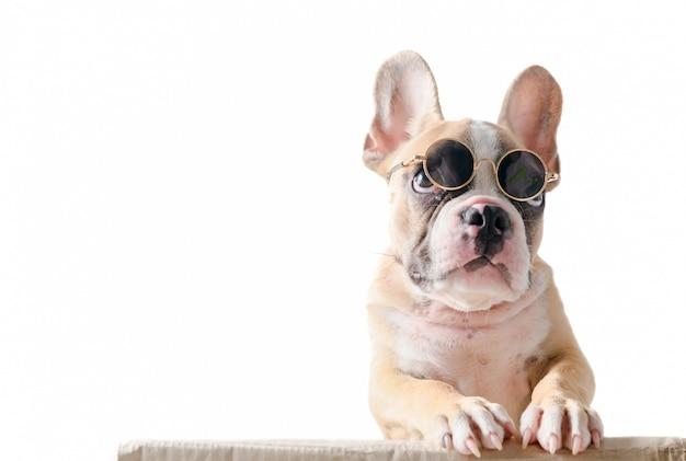 Bulldog français mignon porter des lunettes de soleil se tenir sur la boîte