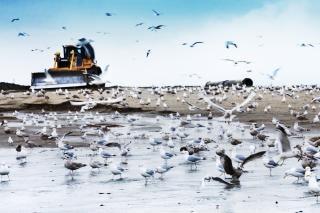 Bulldozer sur la plage