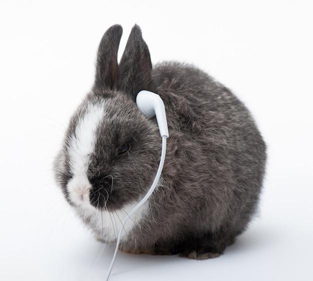 Bunny écoutant De La Musique Photo Premium