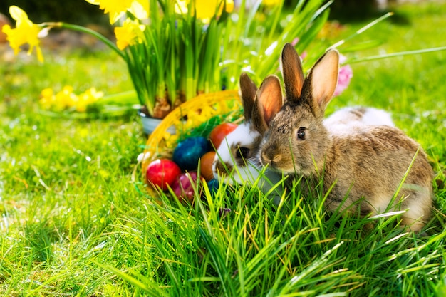 Bunny de pâques sur prairie avec panier et œufs
