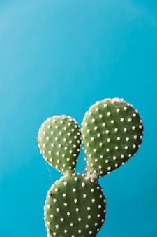 Bureau cactus