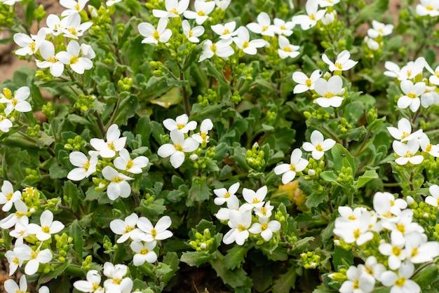 Bush de belles couleurs blanches sur une dalle de béton