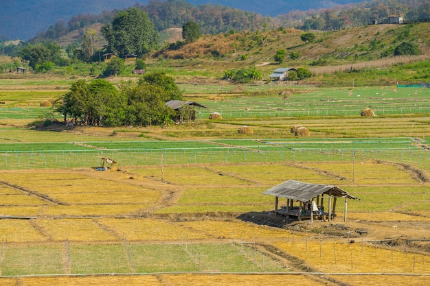 Cabane en bois dans la campagne du champ de riz à pai, en thaïlande