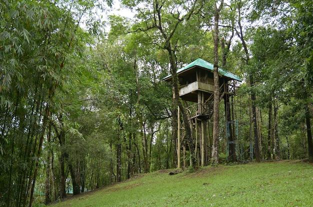 Cabane dans les arbres dans le parc national de thong pha phum, thaïlande