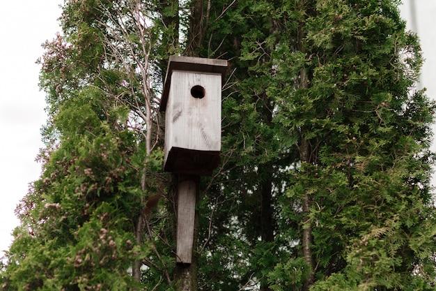 Cabane dans les arbres pour les oiseaux sur l'arbre, cabane pour les oiseaux en hiver