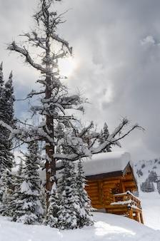 Cabane dans la neige entourée de conifères dans les montagnes rocheuses du parc national banff c