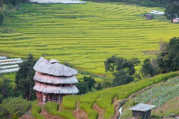 Cabane dans une rizière.