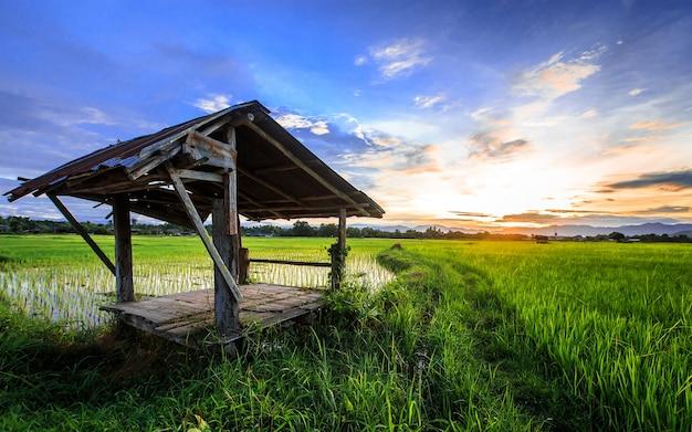 Cabane de fermier thaïlandais dans une rizière avec scène de coucher du soleil