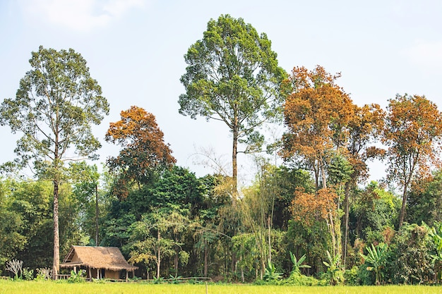 Les cabanes en bois dans les rizières et les arbres multicolores