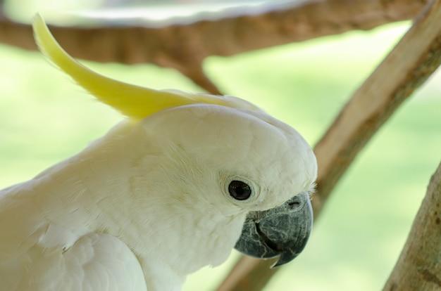 Cacatoès blanc à motifs de fond flou