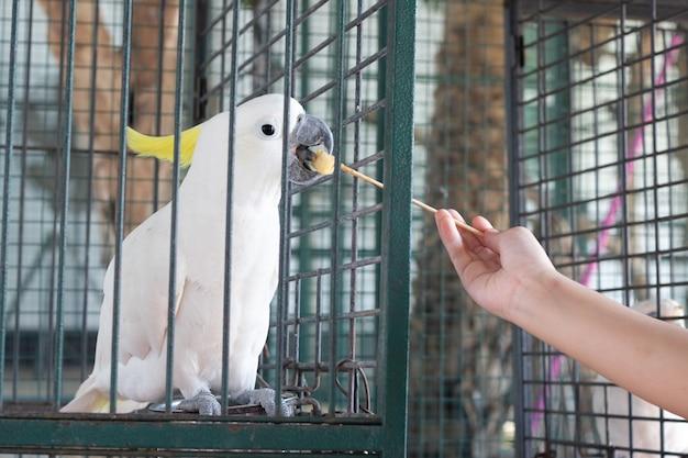 Cacatoès oiseau dans un zoo