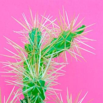 Cactus. amoureux des cactus. plantes sur l'art conceptuel rose