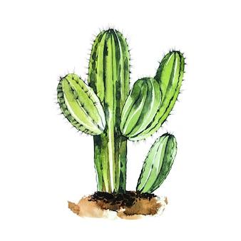 Cactus aquarelle isolé sur fond blanc. il est parfait pour les cartes, affiches, bannières, invitations, cartes de vœux, impressions.