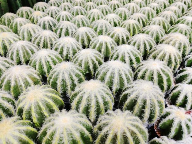 Cactus artificiel en pot en vente dans un centre commercial