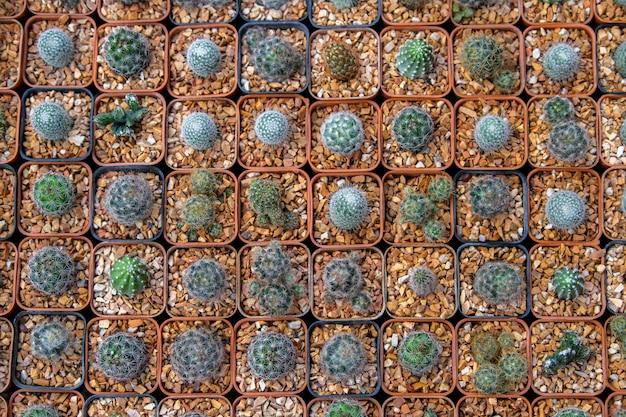 Cactus au marché aux fleurs
