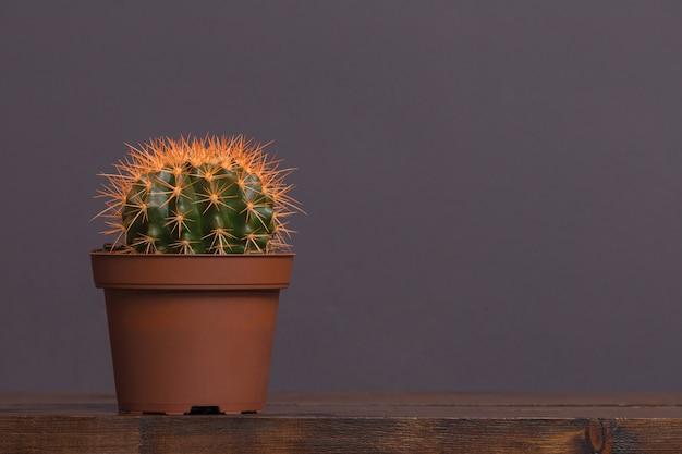Cactus aux épines jaunes dans un pot brun se dresse sur une table en bois